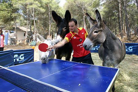 """Los burros de Adebo fueron los insólitos  """"espectadores"""" del partido de exhibición que jugó Carlos Machado en la Sierra  de Rute"""