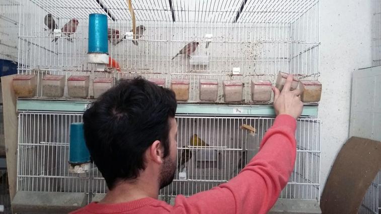 amigos de los pájaros
